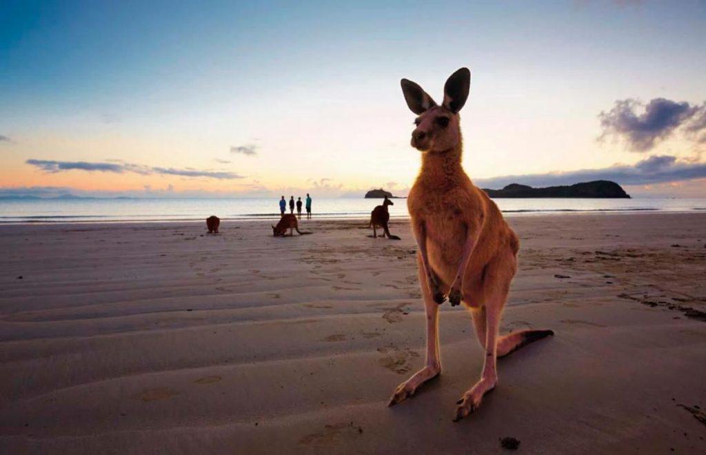 Seasonal camps in Australia (Gold Coast)